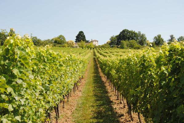 Des vins issus d'une agriculture propre